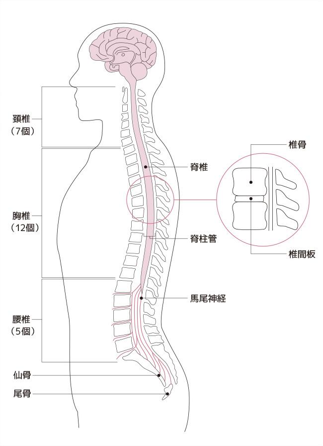腰周りの3つの筋肉の役割と腰痛との関係
