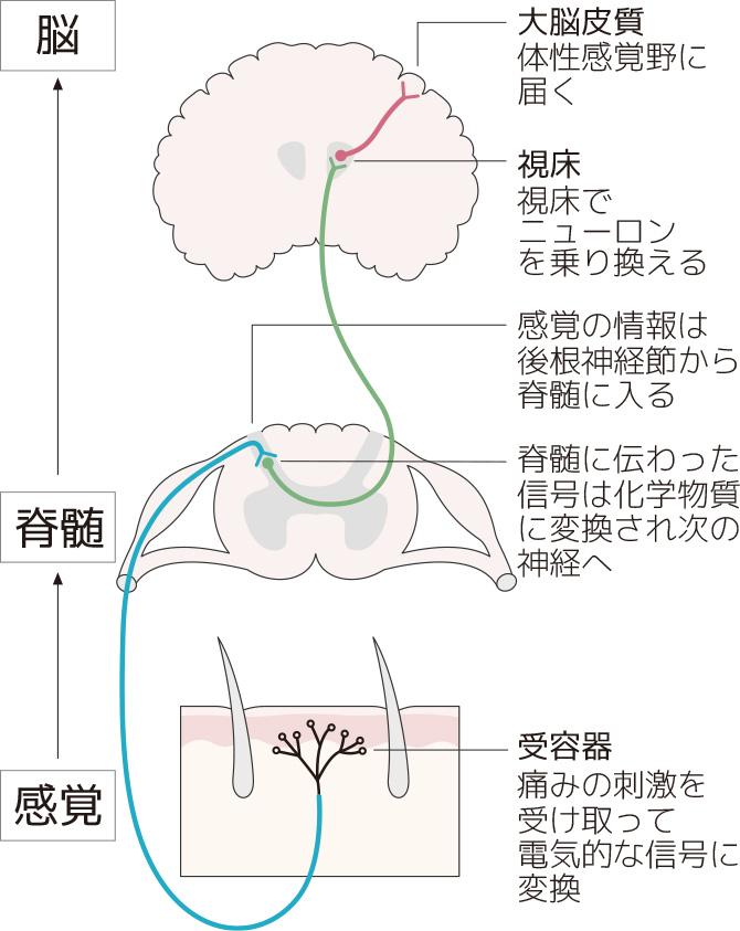 の メカニズム 痛み ガイドライン|日本緩和医療学会